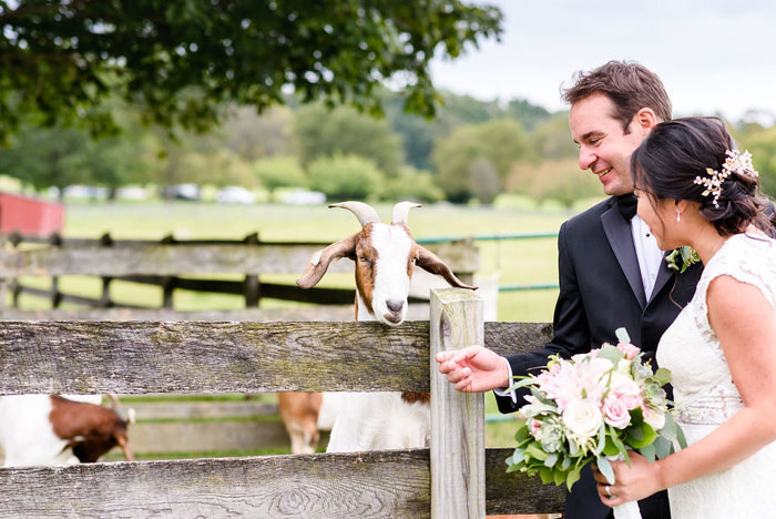 Bride and Groom with Goat at Springton Manor Farm